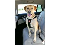 obrázek Postroj pes Bezpečnostní do auta L Zolux