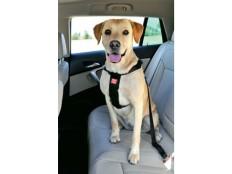 obrázek Postroj pes Bezpečnostní do auta XL Zolux