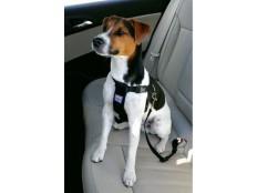 obrázek Postroj pes Bezpečnostní do auta S Zolux